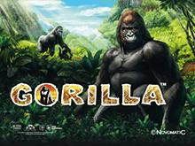Автомат Gorilla с бонусом