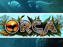 Онлайн аппарат Orca с бонусом